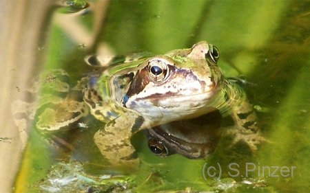 frosch.jpg